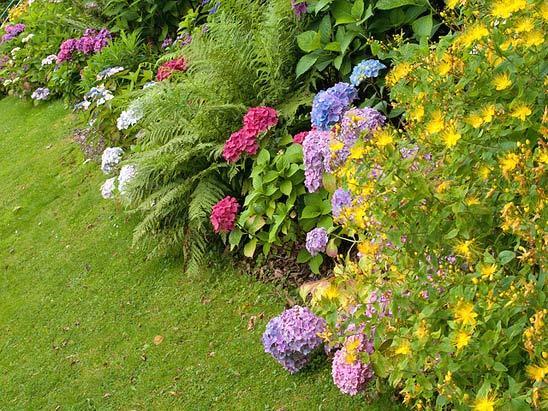 растения для миксбордеров