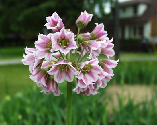 Цветковые растения примеры названия