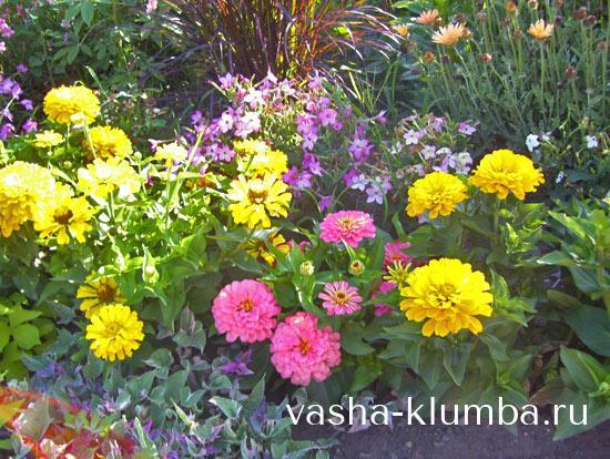 Фото однолетних цветов которые цветут всё лето 64