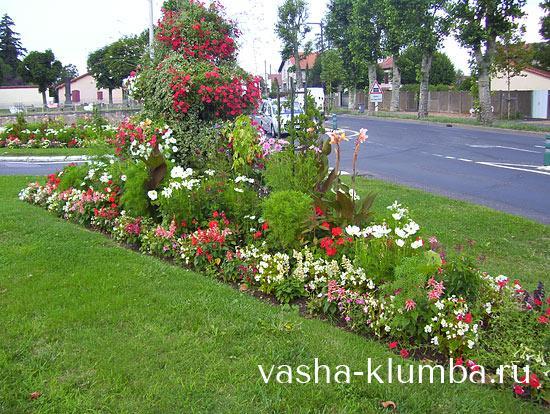Однолетние цветы цветущие все лето