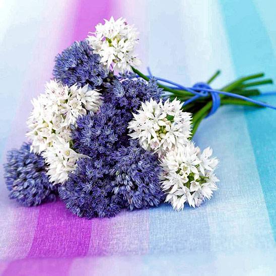 Цветковые растения фото и названия