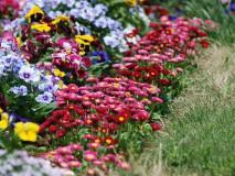 Клумба, цветущая с весны до осени