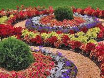 Клумба цветущая круглый год