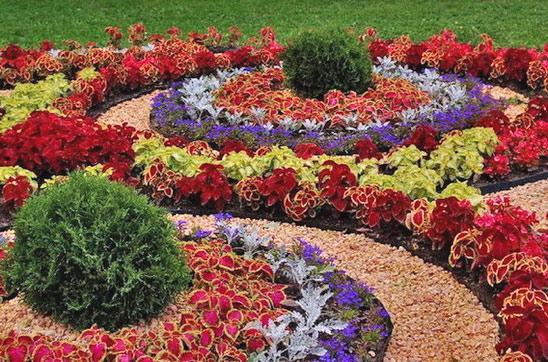 Из каких цветов сделать клумбу фото 685