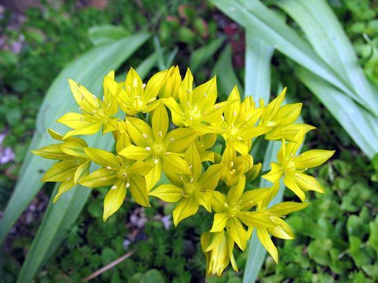 Названия цветковых растений