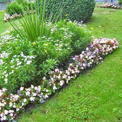 Клумба непрерывного цветения из многолетнико
