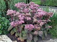 Фото и название цветов на даче