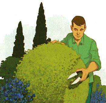 Стрижка кустарников