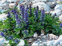 Растения осенних цветников