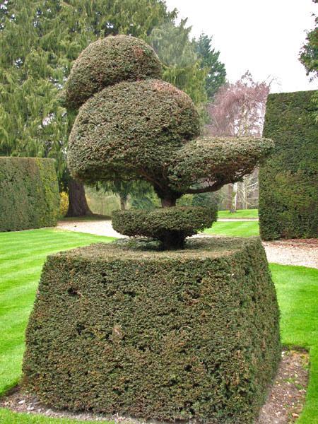 Садовый топиарий своими руками