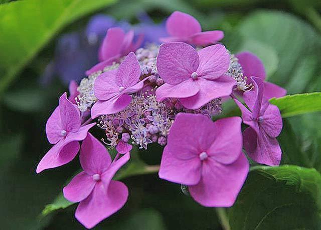 Высокорослые садовые цветы фото и названия