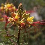 Фото необычных цветов