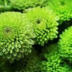 Фото зеленых цветов