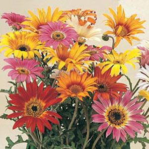 названия садовых цветов и фото