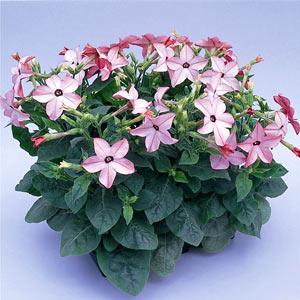 садовые цветы-названия и фото