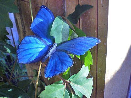 Цветочная клумба бабочка