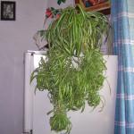 Как выбрать комнатное растение