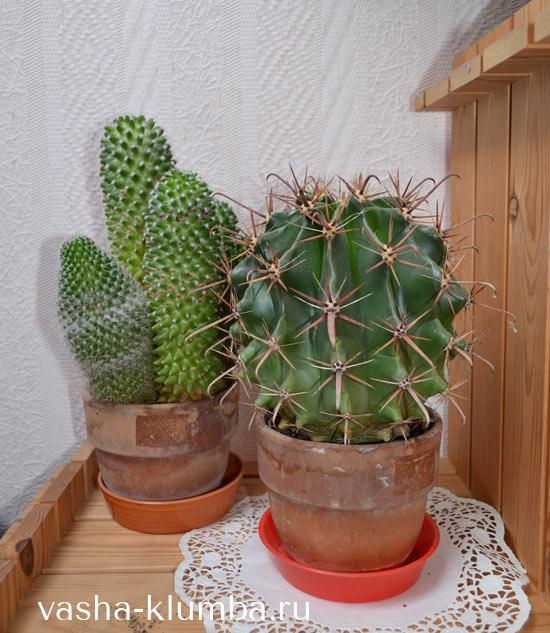 Горшки для комнатных растений